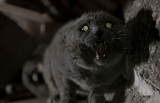 The friendly cat returns from the dead in Pet Sematary.
